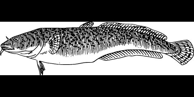 kresba ryby