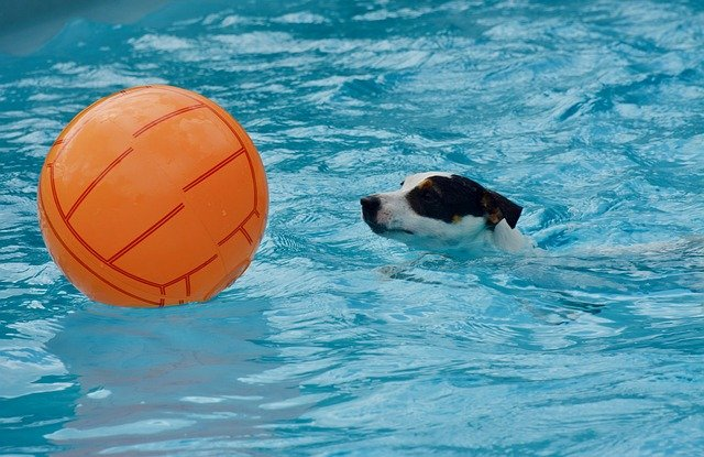 pes v bazénu s míčem